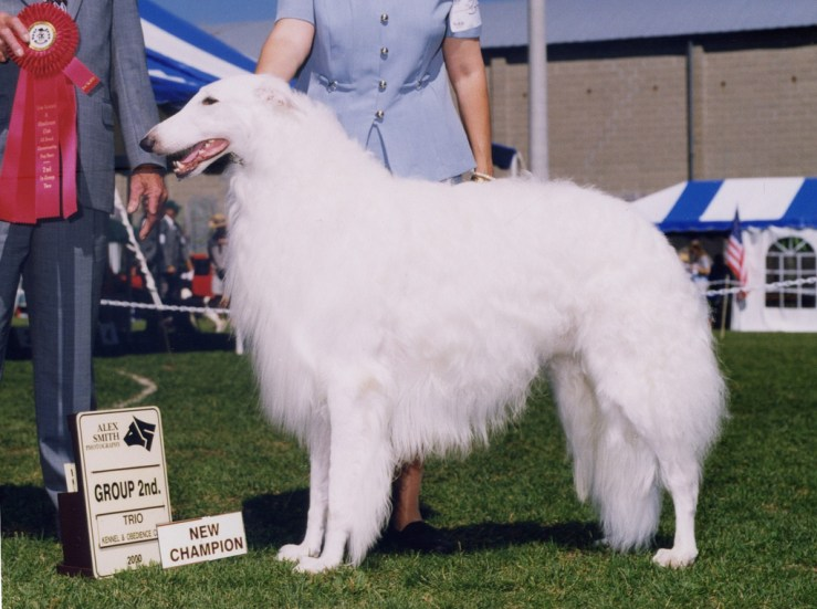 borzoi boy 249551 Russian Male Dog Names
