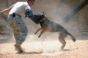 training a dog 300x199 Guard Dog Training