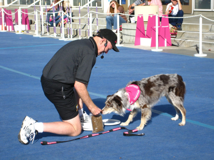 border collie training photo