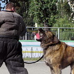 caucasian-dog-training-thumbnail