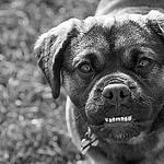 dog enemy