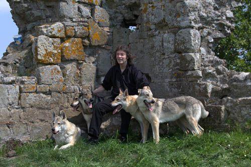 Steve Hackett, bailando con lobos