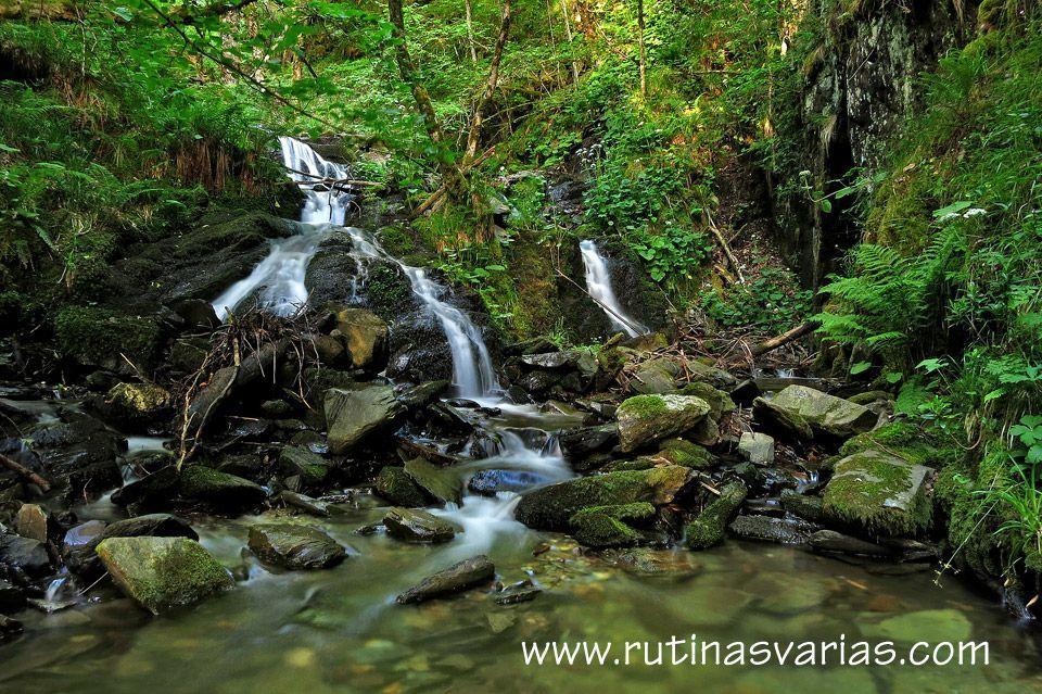Ruta a Brañarronda, las Murias y los Tejos de Rioscuro