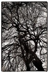 Look Up IV a tree