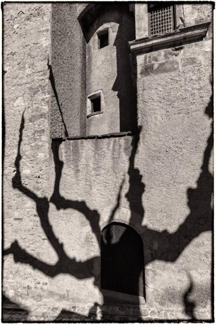 Tree Shadow #3