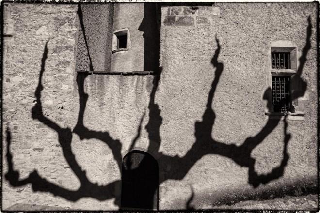 Tree Shadow #4