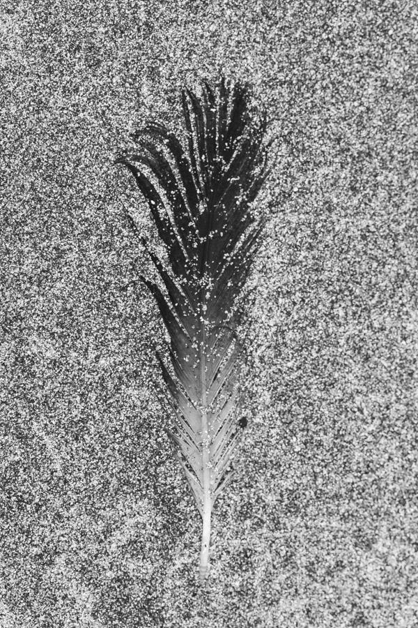 Feather On Glen Brittle Beach