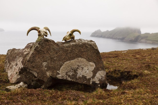 Sheep Skulls With Dùn In The Background