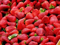 Ashland Strawberry Faire