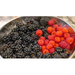 Small Crop Of Mulberry Vs Blackberry