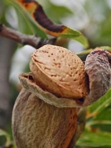 fruits-183412_1280