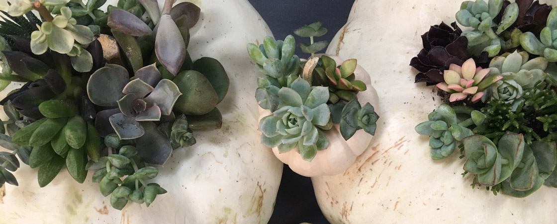 DIY: Succulent Pumpkin Centerpiece