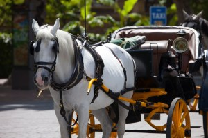 Carriage Ride Insurance