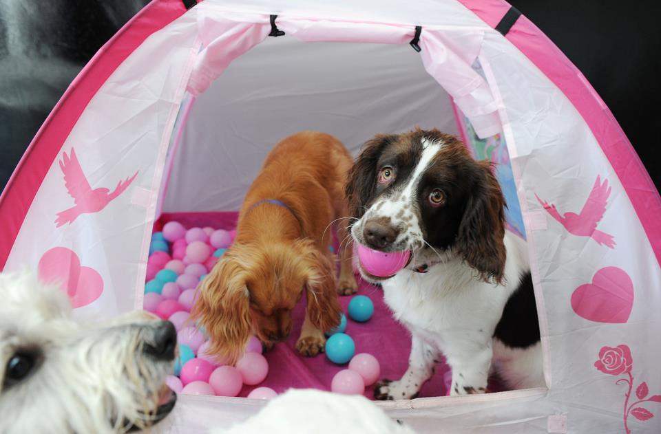 Safe Paws Dog Boarding Stirling