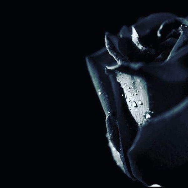 SİYAHI SEVİYORUM ÇÜNKÜ...Gece gibi sessiz ve üzerine toz konduramayacak kadarasil.SİYAHI SEVİYORUM ÇÜNKÜ...Yalnızlığımı paylaşan, Benimle ağlayan,ve tüm renklerle tek başına savaşan o.SİYAHI SEVİYORUM ÇÜNKÜ....Çıkarsız bir sadelik var onda,Asi korkusuz.SİYAHI SEVİYORUM ÇÜNKÜ....Gözlerin gibi,Saçların gibi,Sevdan gibi kapkara.SİYAHI SEVİYORUM ÇÜNKÜ...Sevdan bende yarayken ve rengi kapkarayken başkarenk görmüyor gözlerim.Mesela beyaz sayfalara en çokta siyah şiirler yakışıyor.Daha bir koyu oluyor efkarımın çay saatleri,Ve daha çok güçleniyor hüznüme batırılmış esmer yanlarım.SİYAHI SEVİYORUM ÇÜNKÜ,Gözü kara sevdalara bir tek o kucak açıyorYalansız dolansız en dürüst renktir siyah.Alnına çarpar tüm gerçekleri.Düşünsene, pembesi ve beyazı vardır yalanın,Ama sen hiç siyah yalan diye bir şey duydun mu?Sinan Yıldızlı#busözlerisanayazdım #şiirsokakta #söz#felsefe #siyah #kara #instagram #insta #instasize #instaphoto #instafood