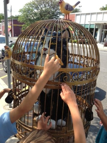 Cat in the Cage, Birds are free