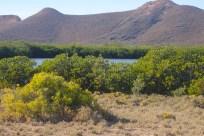 Mangroves near the sea