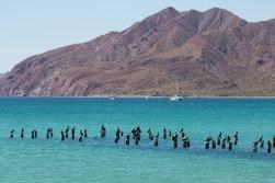 Punta Salina (11 of 13)