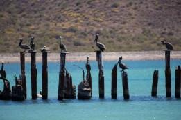 Punta Salina (7 of 13)