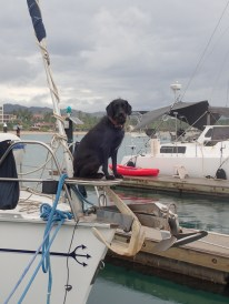 First Mate, Rocky on neighbor boat