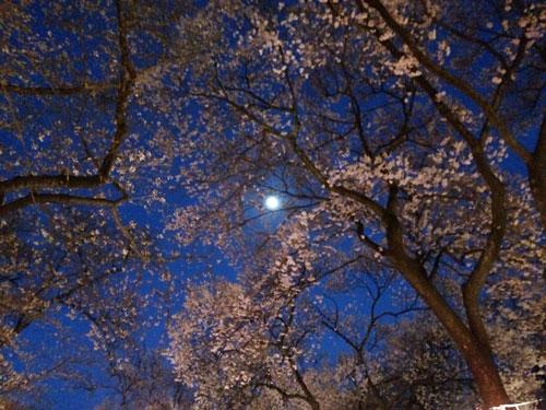140412春日公園桜03