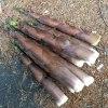 淡竹(ハチク) タケノコ採り