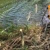 楽しくて美味しい小物釣り(諏訪湖 ワカサギ)