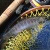 少年の日のイワナ|天竜川水系 フライフィッシング