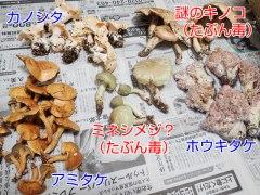 150905横川キノコ集合