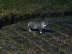 150920諏訪湖の猫
