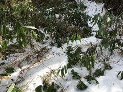 160308冷川雪