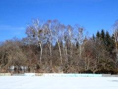 160304宿り木