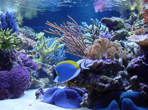 850 gallon Aquarium