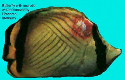 aquarium fish diseases and treatment pdf