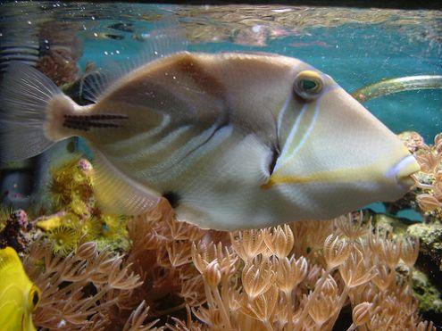 Feeding Saltwater Fish   Saltwater Aquarium Online Guide