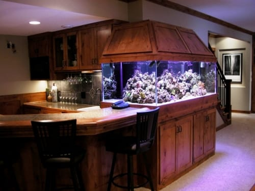 Saltwater Aquarium for Pinterest