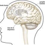 Dopamina: placer, adicciones y cultura emocional