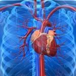 Corazón e intestino delgado, Alegría y Medicina Tradicional China