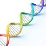 S?ndrome del cromosoma Fr?gil X (S?ndrome de Mart?n Bell)