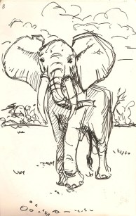 sketch of an Elephant at the Natural History Museum.