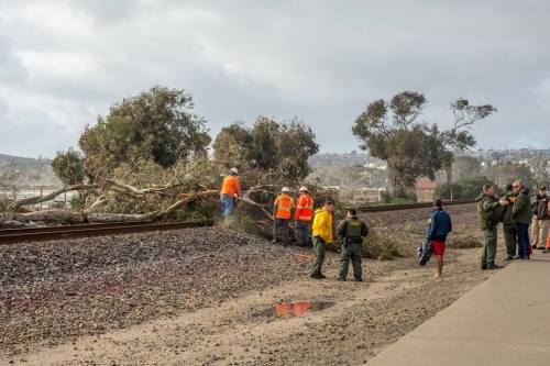 In February, a gusty storm blew trees down around the city. Damage was done to vehicles and structures, and the storm delayed trains. Photo: