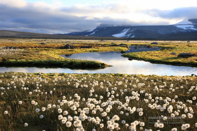 Tranquility on a plateau in Sarek