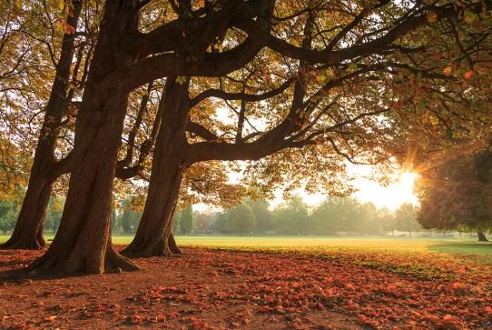 Nice autumn morning in parc de la Tete d'Or.