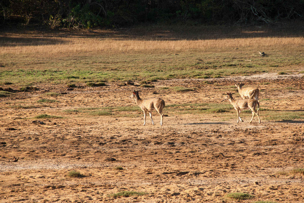 Sri_Lanka_Yala_National_Park_07