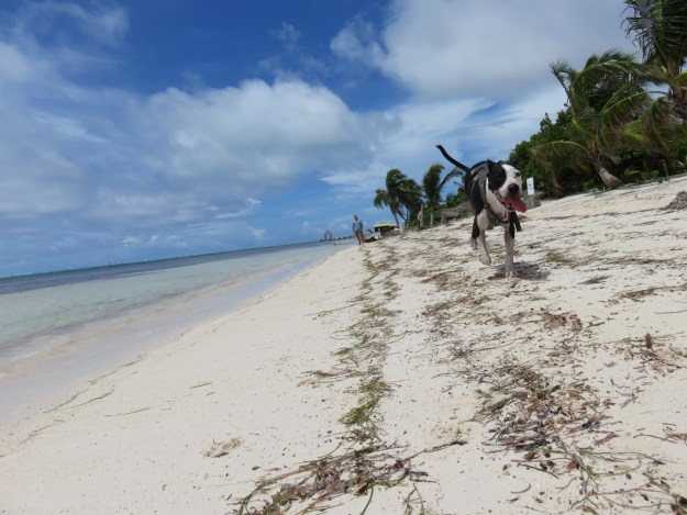 Elsie running down the beach North Ambergris Caye Belize