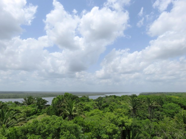 View from the top of the High Temple at Lamanai, Belize