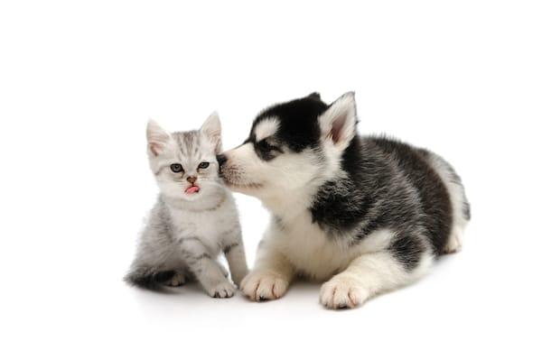 Cute Husky Wallpaper 2016 Trouver Un Nom En 171 M 187 Pour Votre Chien Ou Chat