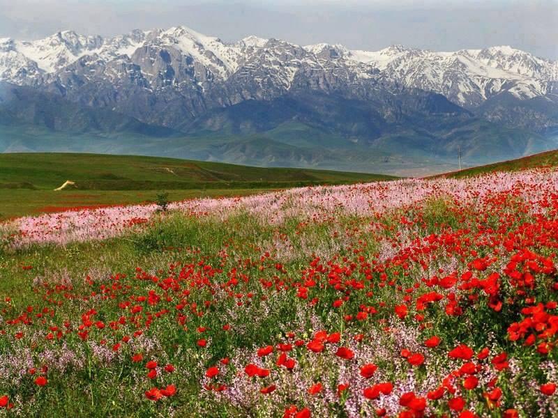 Colorado Fall Wallpaper The Wilde Nature Of Kurdistan