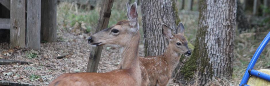 deer-helicopter-2493-940