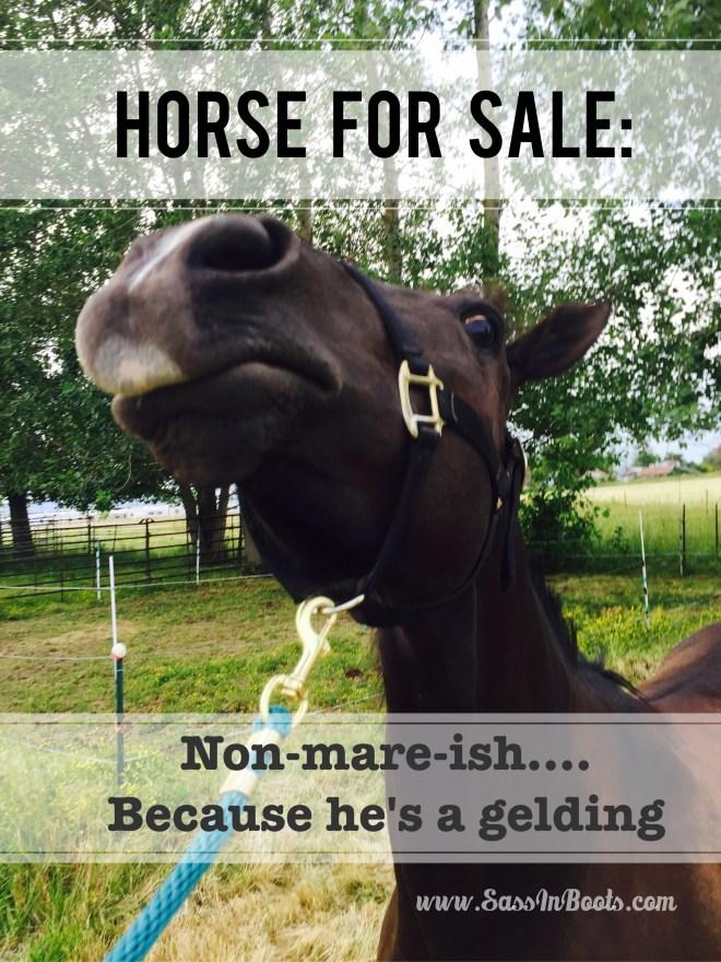 Horse Sale Ad Lies Non Mareish